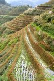 Rice terraces in autumn, Longji-Longsheng, province Guangxi in China Stock Photography