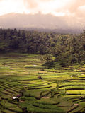 Rice terraces in bali. Indonesia Royalty Free Stock Images