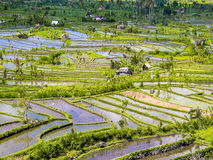 Rice terraces in Bali Royalty Free Stock Photography