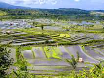 Rice terraces in Bali Stock Image