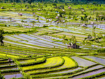Rice terraces in Bali Royalty Free Stock Photos