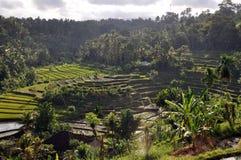 Rice Terraces, Bali, Indonesia. Lush Green Rice terraces in Bali, Indonesia Royalty Free Stock Images