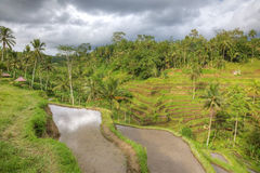 Rice terraces at Bali, Indonesia. Dramatic sky above palm terraces, Bali, Indonesia High dynamic range shot Stock Image
