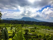 Rice Terraces - Bali, Indonesia. Beautiful Rice Terraces on East Bali Royalty Free Stock Photo