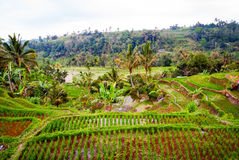 Rice terraces on Bali, Indonesia Stock Photography