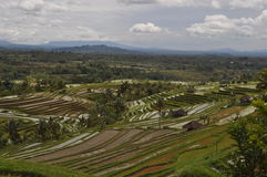Rice terraces Bali Indonesia Royalty Free Stock Image