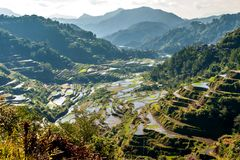 Rice-terraces of Banaue Stock Image