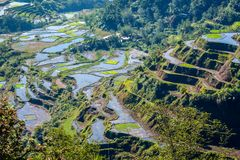 Rice-terraces of Banaue. The famous rice-terraces of Banaue, Luzon, Philippines Royalty Free Stock Images