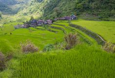 Rice terraces in Banaue the Philippines Stock Photography