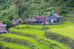Rice terraces in Banaue the Philippines. View of rice terraces fields in Banaue, Philippines. The Banaue rice terraces are UNESCO world heritage site since 1995 stock photo