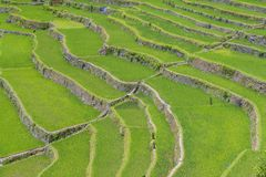 Rice terraces in Banaue the Philippines Royalty Free Stock Image