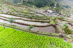 Rice terraces Batad philippines Stock Photo