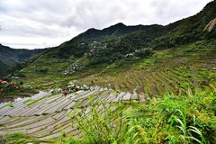 Rice Terraces - Batad, Philippines. Rice Terrace in Batad, Philippines. It is the beautiful scenery which is the UNESCO world heritage. Real life in the province Stock Image