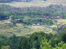 Rice terraces of Batutumonga Tana Toraja Royalty Free Stock Photos