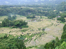 Rice terraces of Batutumonga Tana Toraja Royalty Free Stock Images