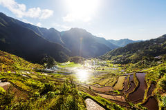 Rice terraces Royalty Free Stock Images