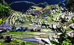 Rice terraces Royalty Free Stock Photo
