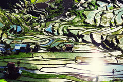Rice terraces Royalty Free Stock Image