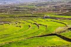 Rice terraces, Bhutan. Green rice terraces, near Punakha, Bhutan stock photo