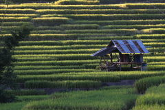 Rice terraces,chiang mai,thailand Stock Photos