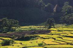 Rice terraces,chiang mai,thailand Stock Photography