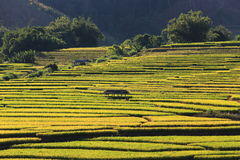 Rice terraces,chiang mai,thailand Royalty Free Stock Photography