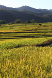Rice terraces,chiang mai,thailand Stock Photo