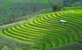 Rice terraces in Chiang mai, Thailand. Royalty Free Stock Photo