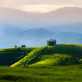 Rice terraces in Chiang mai,Thailand. Landing fields Full green rice fields Stock Photos