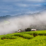 Rice terraces in Chiang mai,Thailand. Landing fields Full green rice fields Royalty Free Stock Images