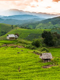 Rice terraces in Chiang mai,Thailand. Landing fields Full green rice fields Royalty Free Stock Image