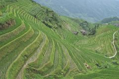 Rice terraces, China. Rice terraces outside the village of Ping-An, Longshen County, China Stock Photos