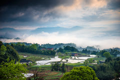 Rice terraces and cloud Stock Photography