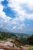Rice terraces and cloud Royalty Free Stock Image