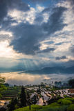 Rice terraces and cloud Stock Photo