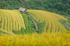 Rice terraces and cottage in the mountains. In Sapa, Vietnam Royalty Free Stock Images