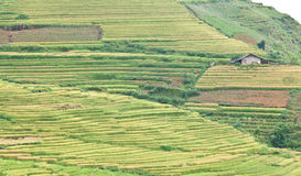 Rice terraces and cottage in the mountains. In Sapa, Vietnam Stock Photography