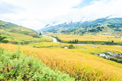 Rice terraces and cottage in the mountains Royalty Free Stock Photography