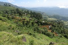Rice terraces and rice cultivation in Sri Lanka. The Rice terraces and rice cultivation in Sri Lanka Stock Photos