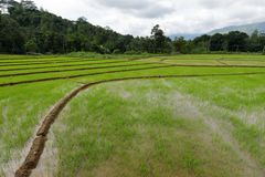 Rice terraces and rice cultivation in Sri Lanka. The Rice terraces and rice cultivation in Sri Lanka Stock Photography