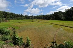 Rice terraces and rice cultivation in Sri Lanka. The Rice terraces and rice cultivation in Sri Lanka Stock Photo