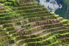 Rice terraces details Royalty Free Stock Image