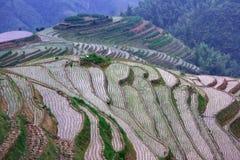 Rice terraces on dragon ridge, evening light Royalty Free Stock Photos