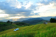 Rice terraces and evening sun. Royalty Free Stock Photo