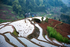 Rice terraces and farmer Royalty Free Stock Photo