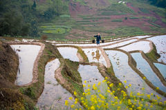 Rice terraces and farmer Stock Images