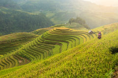 Rice terraces field landscapes beautiful royalty free stock photo