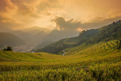 Rice terraces field landscapes beautiful Stock Photo