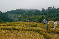 Rice terraces field in Mae Klang Luang ,  Chiang Mai, Thailand Stock Images
