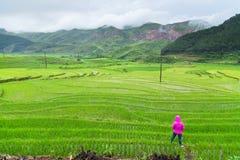 Rice terraces field in Rainning season at Tule Royalty Free Stock Photo